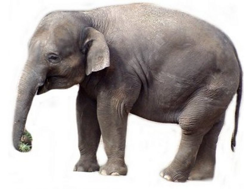 Legacy Systems - How to Eat an Elephant